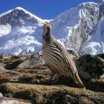 nepal-412_1280